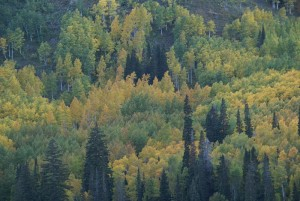 forest mountainside trees fall