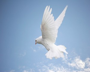 Holy Spirit dove blue sky