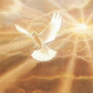 Holy Sprit dove in gold light