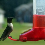Hummingbird_feeder[1]