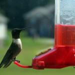 Hummingbird_feeder[1]