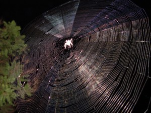 Spider web[1]