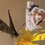 butterflies flower butterfly