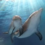 <em>Dolphin Tale 2</em>, A Heartwarming Tale