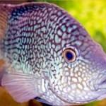 fish ocean sea swim