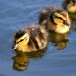 Saving Quacks