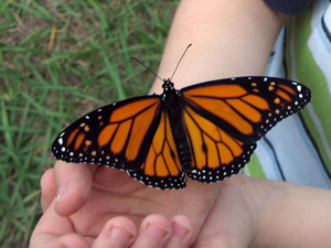 monarch butterfly in child's hand