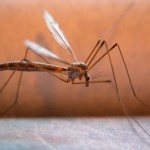 Zika Virus Opportunists