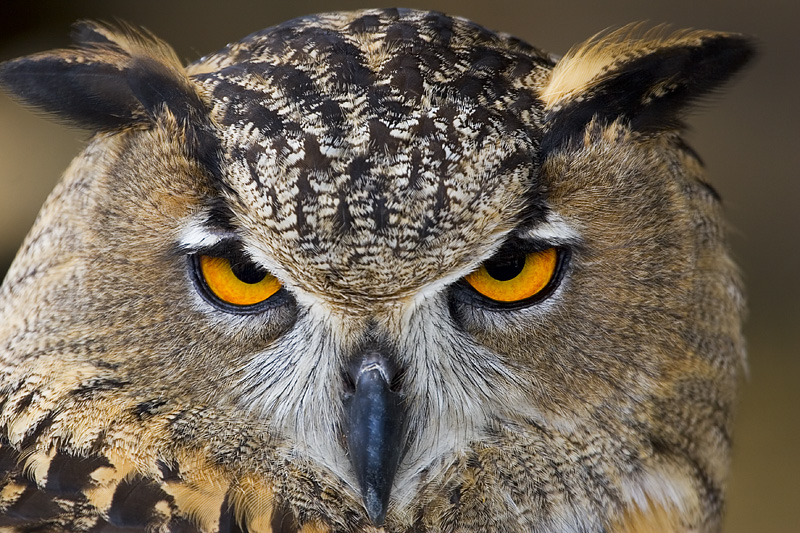 """owls head catholic single women Thankfully i have found comfort in small """"moments of grace"""" that reassure me that my mom is still with me in her head she said, """"if it really is you."""