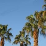 palm trees palms beach sunny