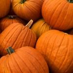 Protestant Pumpkins