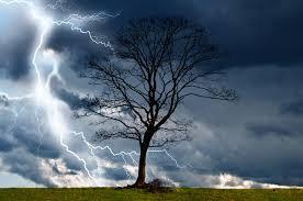 stormy tree
