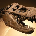 Soft Tissue In T-Rex Bones: Don't Pick a Side