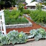 vegetable-garden[1]