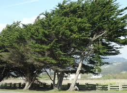 windy trees again